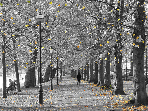 Autumn leaves on The Embankment